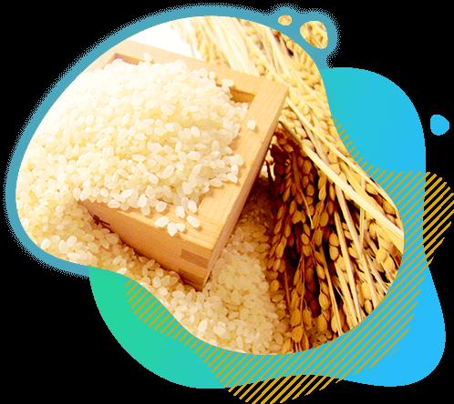 お米の画像
