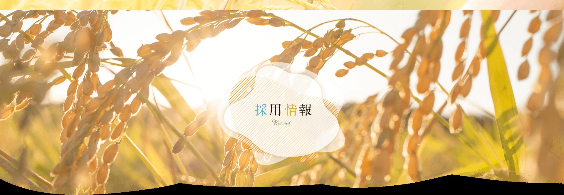 採用情報|米油から健康的に【三和油脂株式会社】